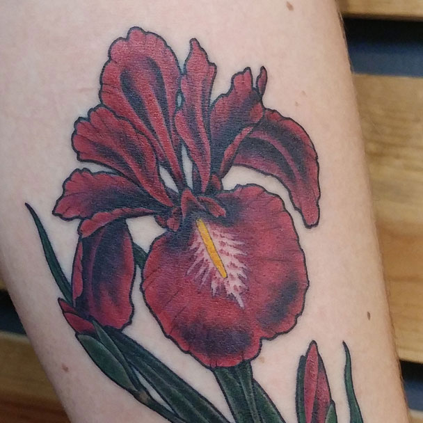 illustrated iris flower tattoo featured image